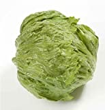 Vegetable - Iceburg Lettuce - Diamanthinas RZ (45-92) - 100 Pill Seeds
