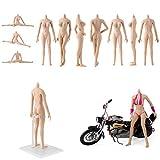 1/6超柔軟シームレス女性素体アクションフィギュアドールボディとステンレス鋼のスケルトン、大バスト (普通肌)イメージ