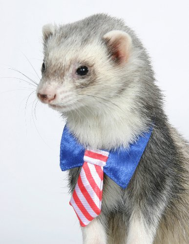 Marshall Ferret Bow Tie Patriotic Tie