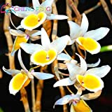 Chinese Cheap Dendrobium Seeds 100 Pcs A Bag Potted Home Flower Bonsai Rare Orchid Seed Mixed Colors Balcony Flower...