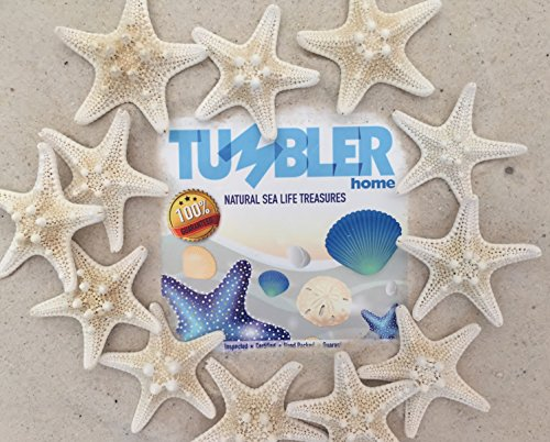 "Tumbler Home Certified Starfish Knobby White 2"" to 3"" Set of"