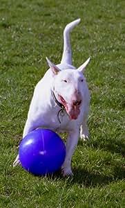 Buy Boomer Ball Indestructible Plastic Dog Toy Large 10