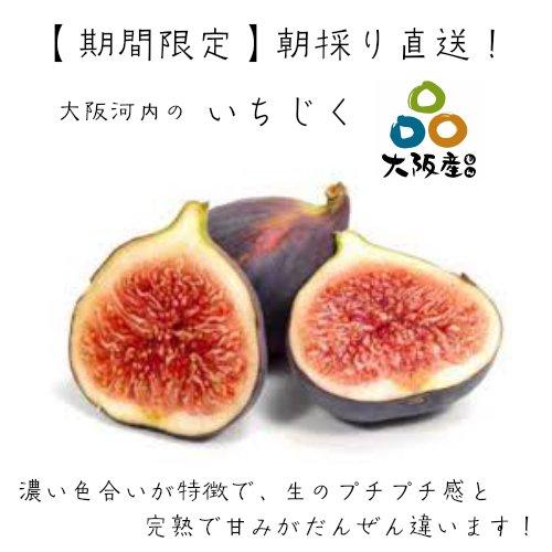 【期間限定】大阪河内の いちじく 約1.5kg 1箱