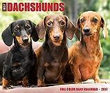 Just Dachshunds 2017 Box Calendar (Dog Breed Calendars)