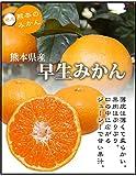 究極の早生みかん 熊本県(河内・三角)産 秀品20kg