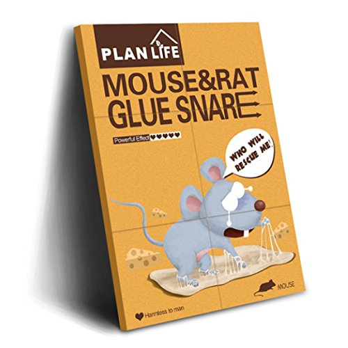 how to catch mice with glue traps