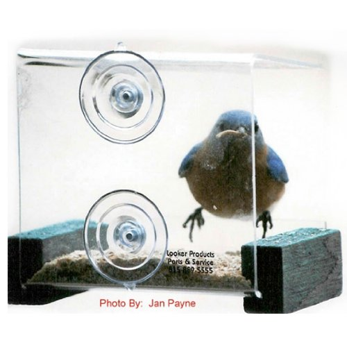 Image of Looker Products Mini Window Feeder with Green Perches (B005DI2K0C)