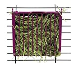 Super Pet Rabbit Hay Buffet Feeder with Snap-Lock Lid (Colors May Vary)