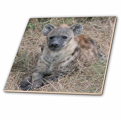 3dRose South African Hyena Front View - Ceramic Tile, 6-Inch (ct_20114_2)