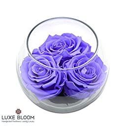 Luxe Bloom Amethyst Preserved Roses | Lasts 60 days | 3 amethyst (purple) roses & greens in a 4"|256|256|?|74b41f48f77029dbbbfabff9680816cb|True|False|UNLIKELY|0.3960861265659332