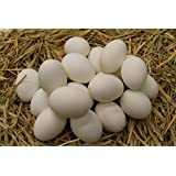 Blown Duck Eggs (20 Pack) (Large, White Soap Wash)
