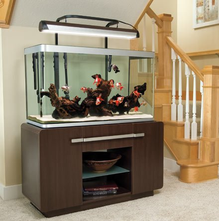 Aquarium gallon archives buy fish tank onlinebuy fish tank online - Fish tank partition wall ...