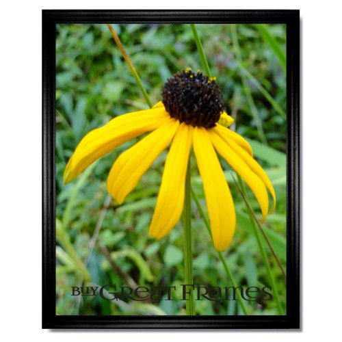 Set-of-3-Simple-11x14-Black-Wood-Frames-Glass