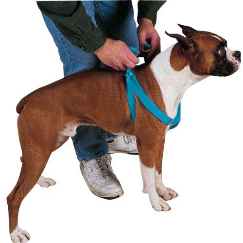 Guardian Gear Nylon 2-Step Dog Harness, 25-40-Inch, Malibu Blue