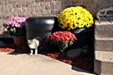 Kitty Tube GENERATION 2 Outdoor Insulated Cat House with Custom Pet Pillow