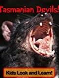 Tasmanian Devils! Learn About Tasmanian Devils and Enjoy Colorful Pictures - Look and Learn! (50+ Photos of Tasmanian Devils)