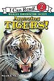 Amazing Tigers!