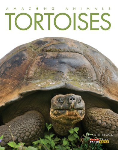 Image for Amazing Animals: Tortoises