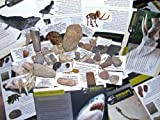 NEW HUGE 40pc Fossil COLLECTION - GENUINE Fossil Dinosaur bone, Trilobite, Ammonites. Woolly Mammoth and more