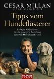 Tipps vom Hundeflüsterer: Einfache Maßnahmen für die gelungene Beziehung zwischen Mensch und Hund title=