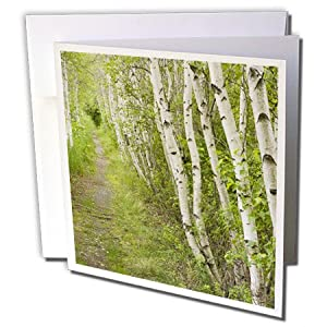 3dRose 8 x 8 x 0.25 Inches Paper Birch Trees, Path, Acadia NP, Maine Jerry and Marcy Monkman Greeting Cards, Set of 6 (gc_90691_1)