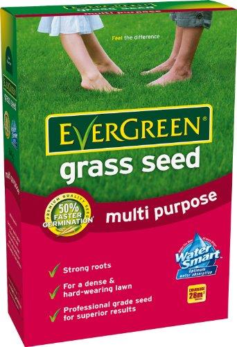 evergreen-semi-per-prato-universali-28-m