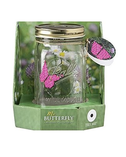 My Butterfly Collection - Animated Butterfly in a Jar - Pink Morpho (Kids In A Jar compare prices)