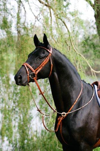Harrys Horse Nylonhalfter Halfter 3fach verstellbar