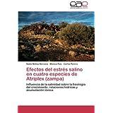 Efectos del estrés salino en cuatro especies de Atriplex (zampa): Influencia de la salinidad sobre la fisiología...