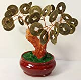 Money Wealth Coin Tree - Bonsai 4""
