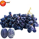 Best-Selling!100 PCS/Pack 12 Kinds Of Grape Seeds Advanced Fruit Seed Natural Growth Grape Sweet Kyoho Gardening...