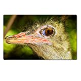Large Table Mats Close Up Portrait Of Ostrich Image 33670534 by MSD Customized Large Tablemats Stain Resistance Collector Kit Kitchen Table Top DeskDrink Customized Stain Resistance Collector Kit Kitchen Table Top Desk
