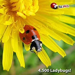 Funny product Orcon LB-C4500 Live Ladybugs, 4,500 Count