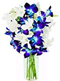 Kabloom Santorini Blue and White Dendrobium Orchids (10 Stems) - With Vase