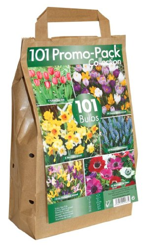 101 Flower Bulb Collection - Big Buy Value Pack - 6 Spring Flowering Varieties (pack Of 101) By Greenbrokers Limited