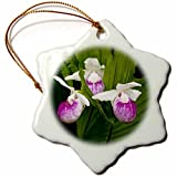 3dRose orn_92113_1 MN, Itasca SP, Showy Lady-Slipper Flower US27 PHA0000 Peter Hawkins Snowflake Porcelain Ornament, 3-Inch