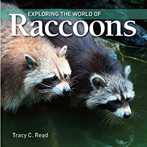 Exploring the World of Raccoons book