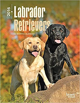 Labrador Retrievers 2016 Engagement