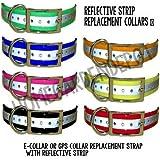 SportDOG Reflective Collar Strap, 3/4-Inch, Blue