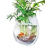 インテリア 壁掛け水槽 15cm径 2点セット 飾り ストーン 水草 金魚鉢 や 花瓶 として