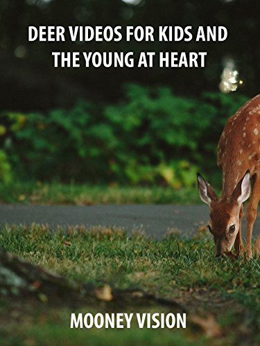 Deer Videos For Kids And The Young And Heart