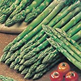3 Asparagus Connover's Colossal Roots - Full Flavoured