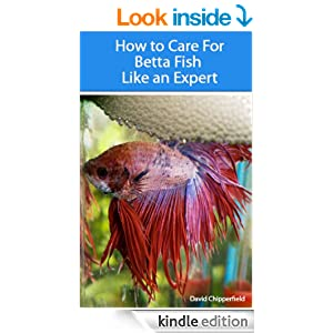 How to care for betta fish like an expert for How to care for betta fish