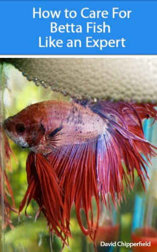 Top 5 wall mounted fish tanks aquariums for How do you take care of a betta fish