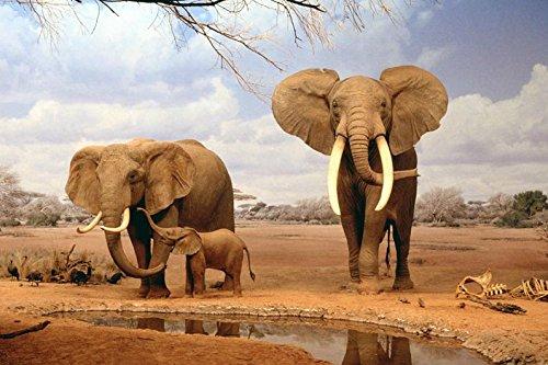 アフリカ ゾウ 親子 ポスター