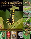 img - for Owlet Caterpillars of Eastern North America book / textbook / text book