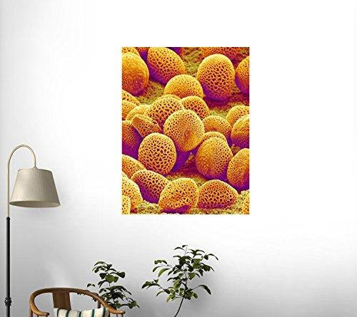Lily Pollen Wall Decal - 42 Inches H X 32 Inches W - Peel And Stick Removable Graphic