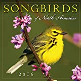 img - for Songbirds of North America 2016 Wall Calendar book / textbook / text book