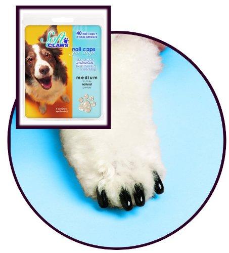 Floor Care Tips front-634276