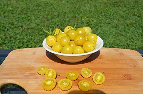 Lemon Drop Organic Tomato Seeds- Rare Yellow Cherry Heirloom- 50+ Seeds by Ohio Heirloom Seeds (Sweet Tomato Seeds compare prices)